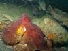 octopus-skin-texture