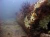 Large reef culvert