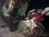 Jacksonville Reef Growth