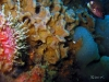 Sponge on Florida artificial reef
