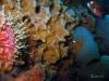 Sponge on Florida artificial reef