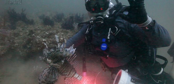 Invasive Lionfish Populations Increasing?