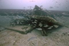 Reef pile