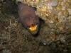 jacksonville-reef-eel-jpg