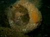 reef-toliet-jpg