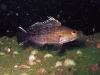 Andy King Reef Sea bass
