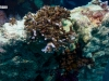 Culvert reef fishing line snarl