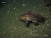 ff-2011-jacksonvill-sea-bass