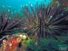Sea urchin flagler reef barge