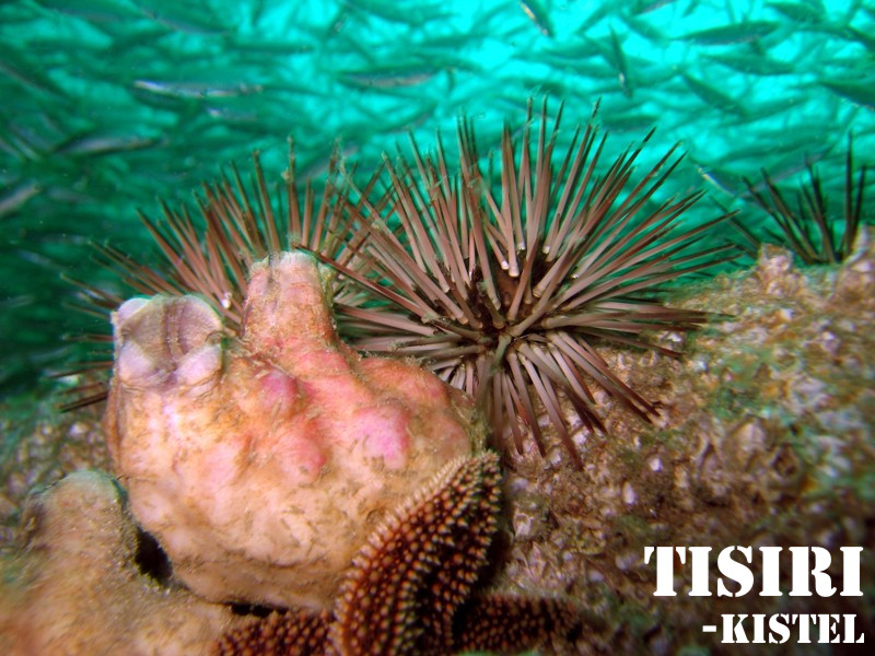 urchin-and-bait