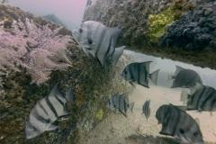 Spadefish City