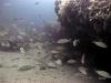 hg-jacksonville-ledge-reef-life