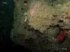 hg-jacksonville-ledge-reef-sponge