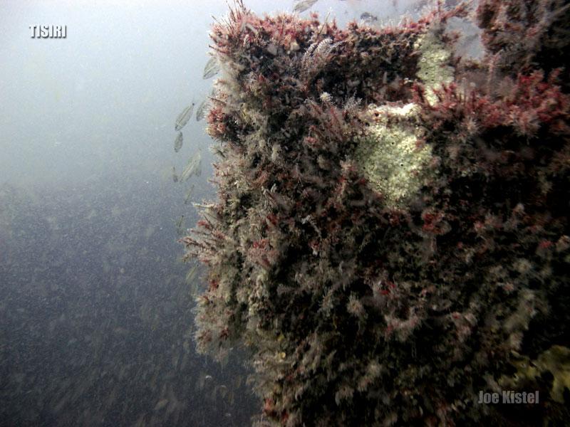 1-bob-engle-reef