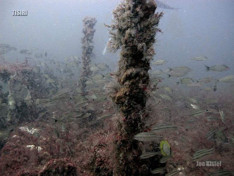 2-bob-engle-jacksonville-reef