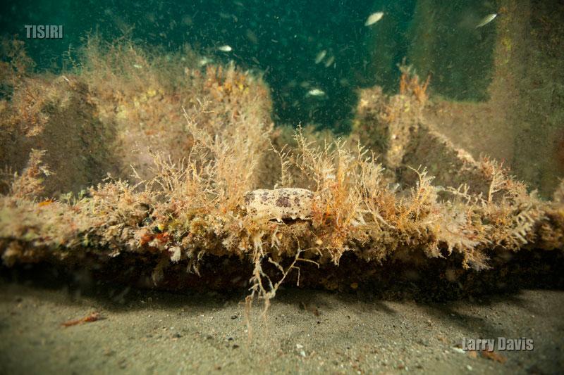 7-larry-bob-engle-reef