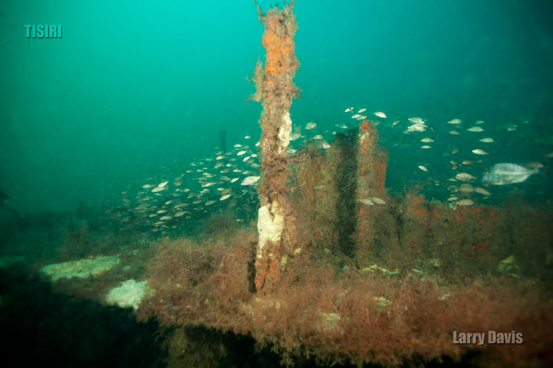 8-barge-reef-jacksonville
