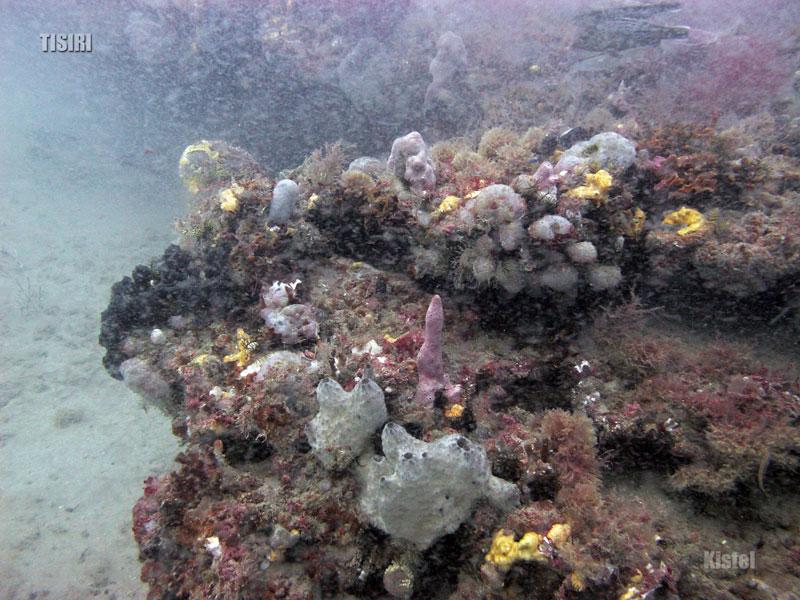 florida-ledge-reef