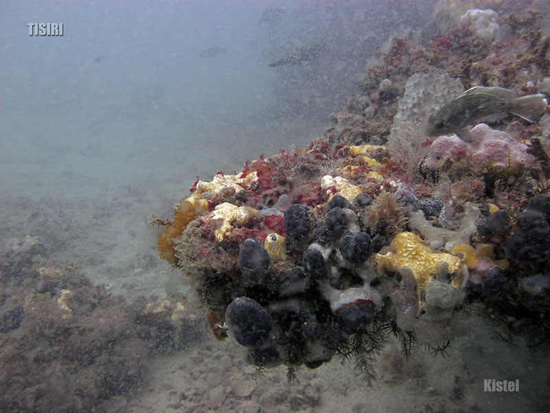 jacksonville-ledge-reef