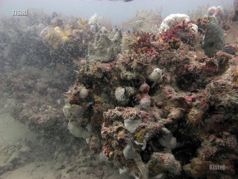 reef-ledge-jacksonville