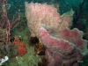 florida-sponge