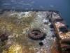 jacksonville-scuba-dive-reef