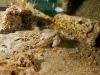 jacksonville-bat-fish