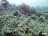 barge-reef-encrusting-growth
