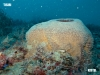 upside-down-barge-reef-sponge