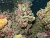 hopper-reef-scallop