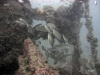 hopper-reef-tomtates
