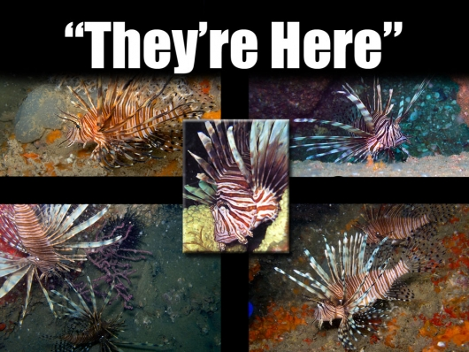 3 Lionfish in Jacksonville