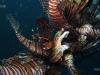 lionfish-stringer