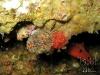 flower-worm