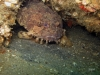 oyster-toadfish-offshore-reef