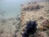 st-augustine-marine-habitat