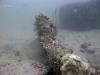 st-augustine-reef-habitat