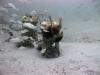 1-dorthy-louise-reef