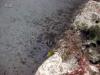 3-st-augustine-barge-reef
