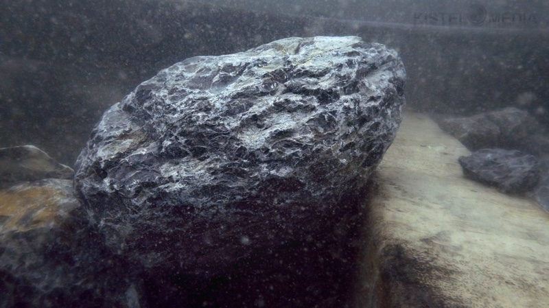 shell-rock-web