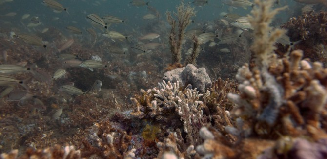 Scouting for reefs in need of servicing
