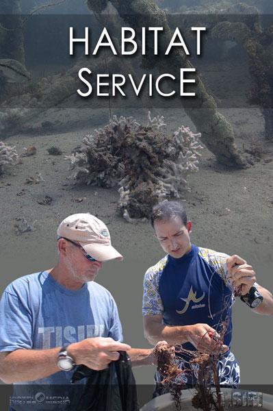 Reef Service
