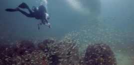 """Sunken Conservation"" Documentary Online Viewing"