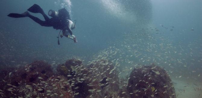 """Sunken Conservation"" Documentary Online Viewing"