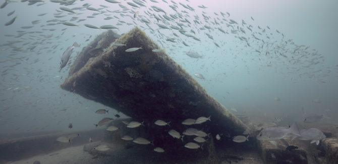 Artificial Reef Structures Evolve With Time